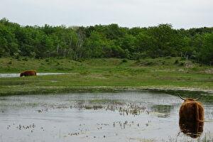 Meest duurzame natuurgebied Voornes Duin